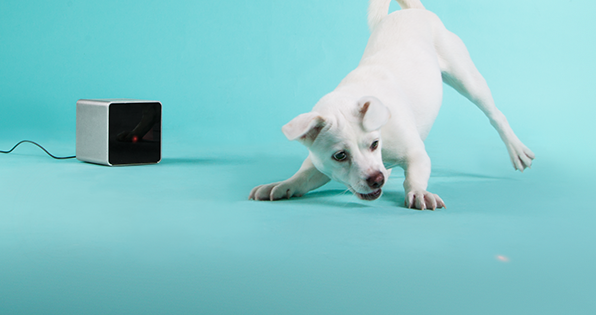 Petcube launches iOS App and wins at The Europas